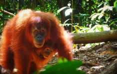 Jungle Trekking, Bukit Lawang