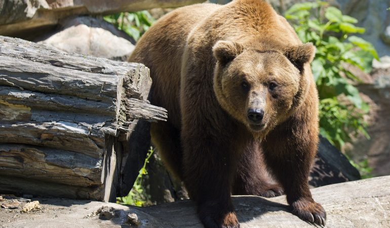 Hiking in North America: Staying Safe in the Bear Country