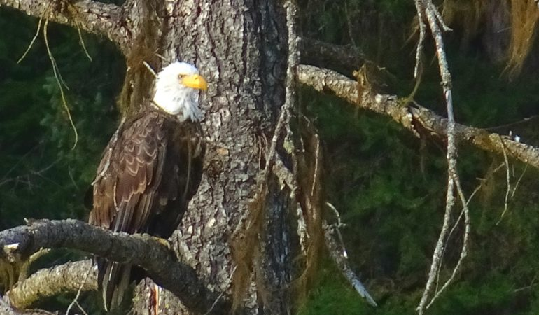Little Pend Oreille – a place where we finally found wildlife